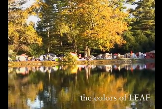 The Colors of LEAF - 2011