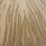 Ambrosia Maple tonewood